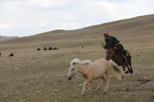 Dagva catching a horse.